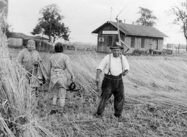 Auf dem Feld Großvater Weiß