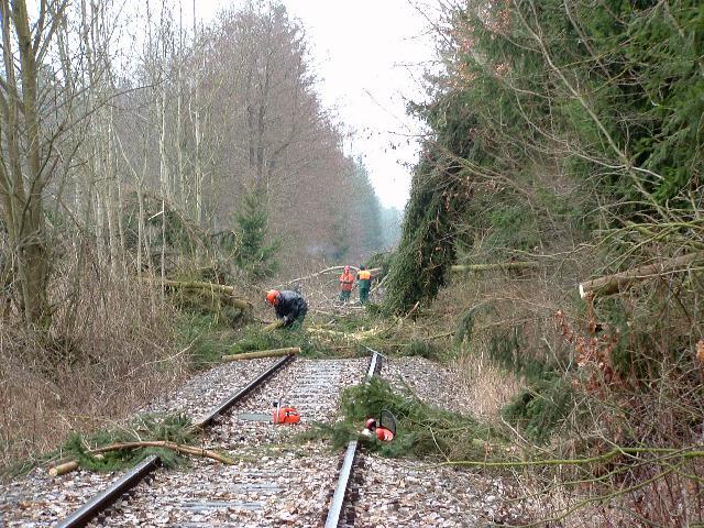 8. März 2008 bei Kaltenbronn
